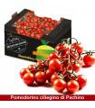 Pomodorini ciliegino di Pachino - 6.5kg